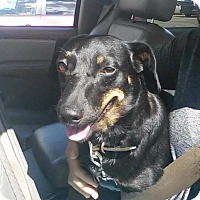 Adopt A Pet :: Gunny-PENDING ADOPTION - Marcellus, MI