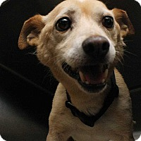 Terrier (Unknown Type, Medium) Mix Dog for adoption in Fort Madison, Iowa - Moby