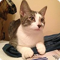 Adopt A Pet :: Cass - St. Louis, MO