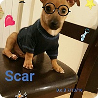 Adopt A Pet :: Scar - LAKEWOOD, CA