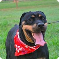 Adopt A Pet :: Jessie - San Ramon, CA