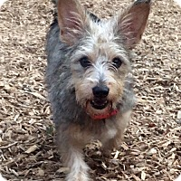 Adopt A Pet :: Collene - Sudbury, MA