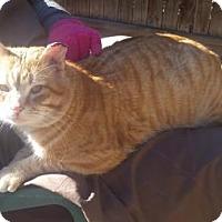 Adopt A Pet :: Titan - Fort Collins, CO