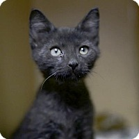 Adopt A Pet :: Felice - Kettering, OH
