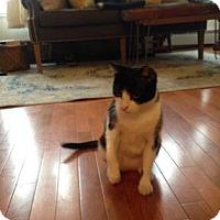 Adopt A Pet :: Evie - New York, NY