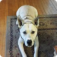 Adopt A Pet :: Molson - East Randolph, VT