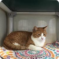 Adopt A Pet :: Samantha - Fort Collins, CO