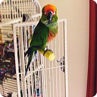 Adopt A Pet :: Sunny - Glens Falls, NY
