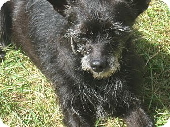 Terrier (Unknown Type, Small) Mix Dog for adoption in Tumwater, Washington - Dolly