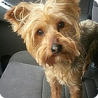 Adopt A Pet :: Gizmo(PENDING!) - Chicago, IL
