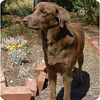 Adopt A Pet :: Dougie - Litchfield Park, AZ