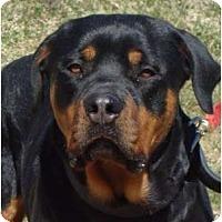 Adopt A Pet :: Magnum (adoption pending) - Albany, NY