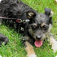 Adopt A Pet :: Pippa - Shelter Island, NY