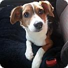 Adopt A Pet :: Ralph