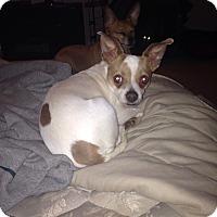 Adopt A Pet :: Whit - Philadelphia, PA
