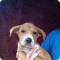 Adopt A Pet :: Coral - Oviedo, FL