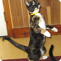 Adopt A Pet :: Ty Ty - Witter, AR