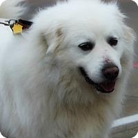 Adopt A Pet :: King - Kyle, TX