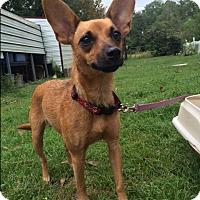 Adopt A Pet :: Lacie - Daleville, AL