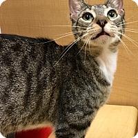 Adopt A Pet :: Tango - Houston, TX