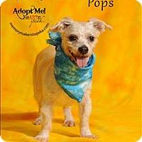 Adopt A Pet :: Pops - Topeka, KS
