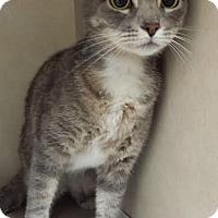 Adopt A Pet :: Vista - Westminster, CA