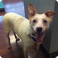 Adopt A Pet :: Bertha - Oak Ridge, NJ
