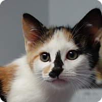 Adopt A Pet :: Winifred - Greenfield, IN
