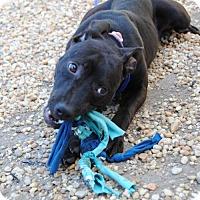 Adopt A Pet :: Penny - Philadelphia, PA