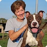 Adopt A Pet :: Bellamy - Elyria, OH
