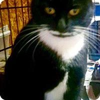 Adopt A Pet :: Goodwyn - Danbury, CT