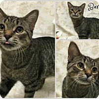 Adopt A Pet :: Bartlett - Joliet, IL