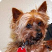 Adopt A Pet :: Chewbacca - Wildomar, CA