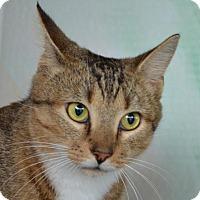 Adopt A Pet :: Lewis - Englewood, FL