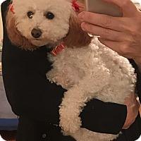 Adopt A Pet :: Bailey - Oak Ridge, NJ