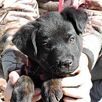Adopt A Pet :: Kaiser - Berkeley Heights, NJ