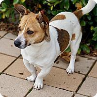 Adopt A Pet :: Ruben - Berkeley, CA