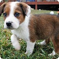 Adopt A Pet :: Zoe - Danbury, CT