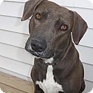 Adopt A Pet :: Godiva