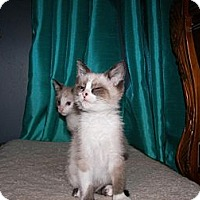 Adopt A Pet :: Austin - Columbus, OH
