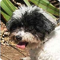 Adopt A Pet :: Skylar - La Costa, CA