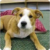 Adopt A Pet :: Hosanna - Video! - Mocksville, NC
