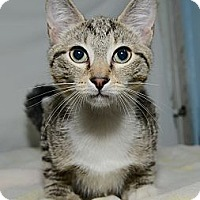 Adopt A Pet :: Spinoza - New York, NY