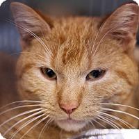 Adopt A Pet :: Kweli - Chicago, IL