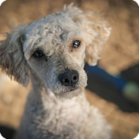Adopt A Pet :: Rusty - Temecula, CA
