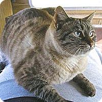 Adopt A Pet :: Zooey - Alameda, CA