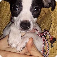 Adopt A Pet :: Othello - Austin, TX