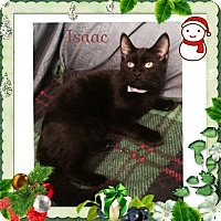 Adopt A Pet :: Isaac - Harrisburg, NC