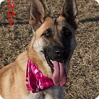 Adopt A Pet :: Sandy - Patterson, CA