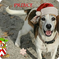 Adopt A Pet :: PRINCE - Ventnor City, NJ